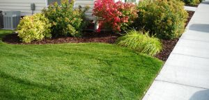Trimmed and Edged Yard - Idaho Falls Lawn Care