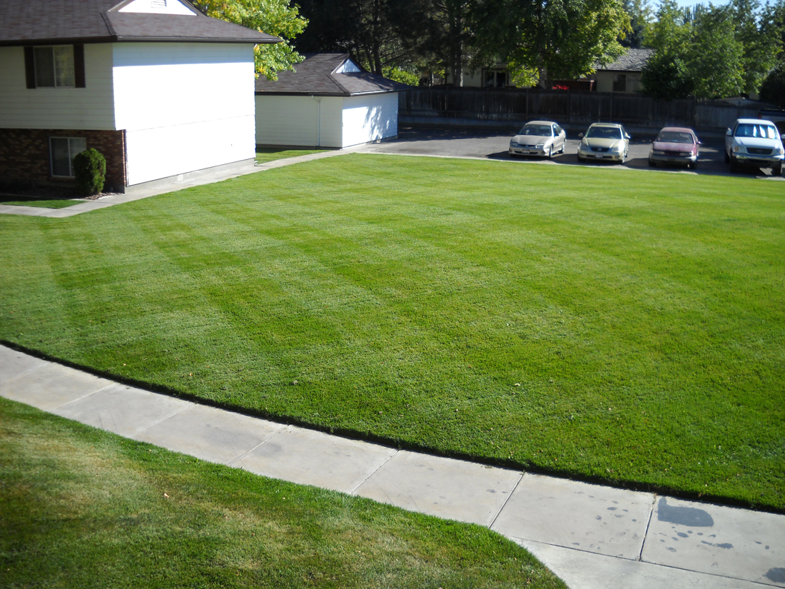 Freshly Cut Lawn - Idaho Falls Lawn Care