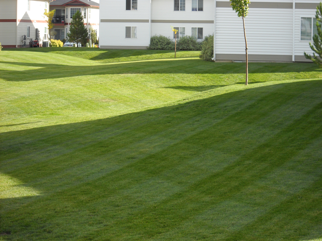 Well Maintained Green Lawn New Leaf Landscape Design And