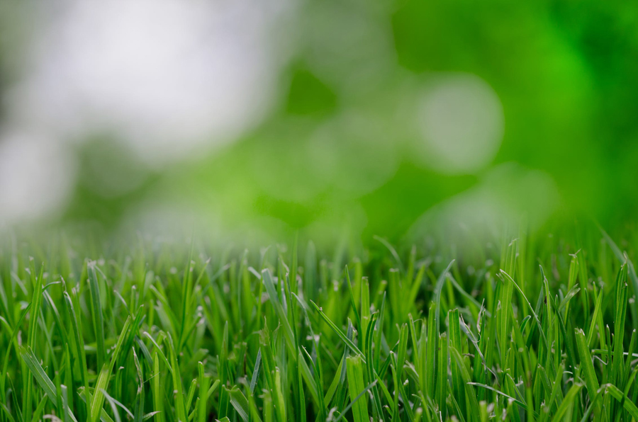 lawn care idaho falls