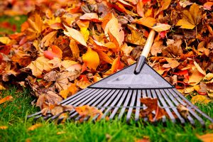 Idaho Falls Fall Cleaning Services