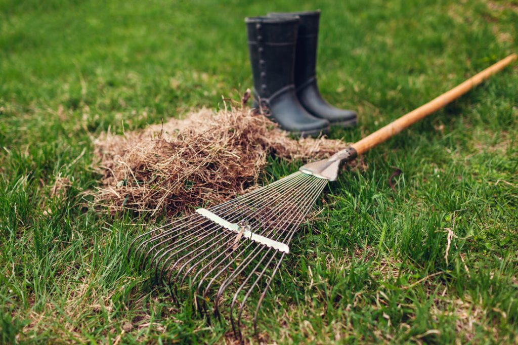 Spring Lawn Care In Idaho Falls