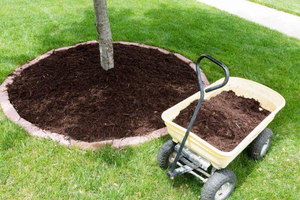 mulching-tree