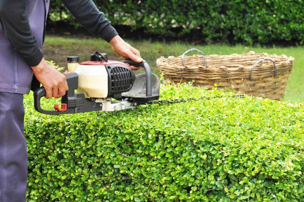 pruning-trimming