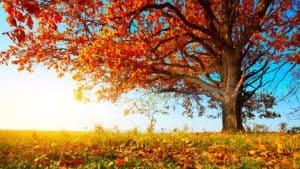 Fall Tree - Idaho Falls Sprinkler Winterization