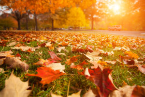 Leaves In Autumn - lawn maintenance idaho falls