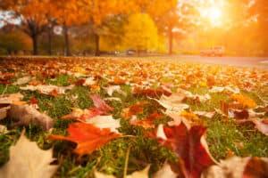 Leaves In Autumn - lawn maintenance idaho falls